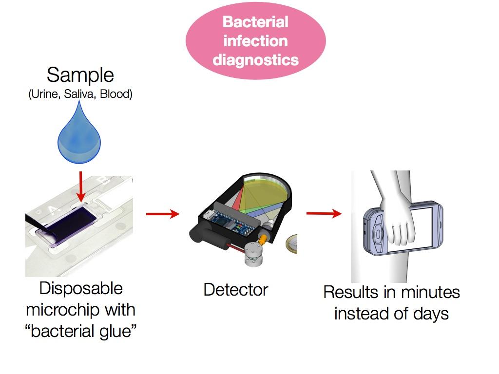 Bacterial Infection Diagnostics  Bacterial Infec...